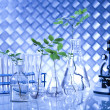 Chemistry equipment, plants laboratory glassware — Stock Photo #28442373