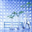 Plants and laboratory — Stock Photo #28442481