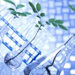 Plants and laboratory — Stock Photo #28442483