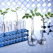 Plants and laboratory — Stock Photo #28442551