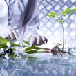 Scientist with plant in laboratory — Stock Photo #28442949