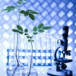 Chemistry equipment, plants laboratory glassware — Stock Photo #28443067