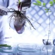 Scientist with plant in laboratory — Stock Photo