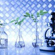 Chemistry equipment, plants laboratory glassware — Stock Photo #28443349