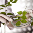 Scientist with plant in laboratory — Stock Photo #28443357