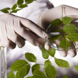 Scientist with plant in laboratory — Stock Photo #28443435