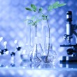 Chemistry equipment, plants laboratory glassware — Stock Photo #28443471