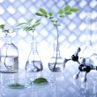 Stock Photo: Plants in laboratory