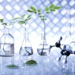 Plants in laboratory — Stock Photo