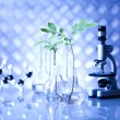 Chemistry equipment, plants laboratory glassware — Stock Photo #28443693
