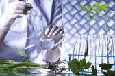 Plant in hands of the scientist — Stock Photo
