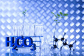 Laboratory glassware, genetically modified plant — Stock Photo
