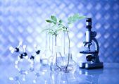 Matériel de chimie, verrerie de laboratoire de plantes — Photo