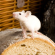 Stock Photo: Mouse on loaf