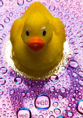 Pato con signo de web — Foto de Stock