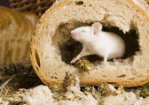 Mouse in a loaf — Stock Photo