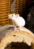 Mouse on a loaf — Stock Photo
