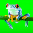 Frog on green background — ストック写真