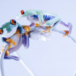 Frogs on cable Internet — Stock Photo