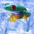 Frog with ice cubes — Stock Photo