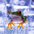 Stock Photo: Frog with ice cubes