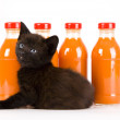 Cat & Orange drink — Stock Photo #30692297
