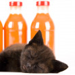 Cat & Orange drink — Stock Photo #30692307