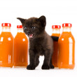 Cat & Orange drink — Stock Photo #30692393
