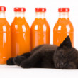 Cat & Orange drink — Stock Photo #30692395