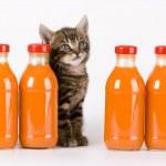 Cat & Orange drink — Stock Photo #30692433