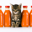 Stock Photo: Cat & Orange drink