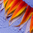 Autumn leaves — Stock fotografie