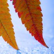 Leaf background — Stock Photo #30696817