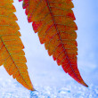 Leaf background — Lizenzfreies Foto