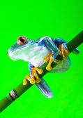 Frog on green background — Stock Photo