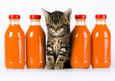 Cat & Orange drink — Stock Photo