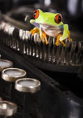 Frog & Typewriter — Stock Photo