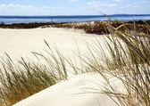 沙丘 — 图库照片