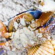 The crab on the sand — Foto Stock