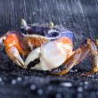 Crab focus on front claw — Stock Photo