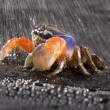 Crab focus on front claw — Stock Photo #30700389