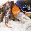 Stock Photo: Crab on sand