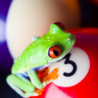 Frog & Billiard balls — Stock Photo