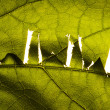 WWW sign on leaf — Stock Photo