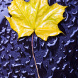 Stock Photo: Wet leaves