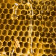 Honey comb — Stock Photo #30701747