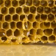 Honey comb — Stock Photo #30701755