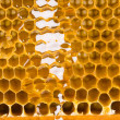Honey comb — Stock Photo #30701801