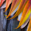 Leaf background — Stock Photo #30702323