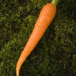 carrot — Stock Photo #30702879